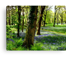 Bluebell Heaven Canvas Print