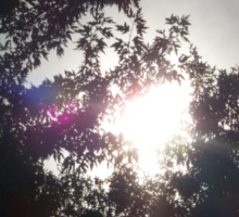 sun shining through the trees Sticker