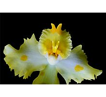 Granny Polka Dot - Orchid Alien Discovery Photographic Print