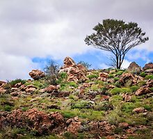 Rough Ground by Christy Radford