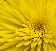 Yellow flower by SIR13