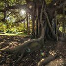 Light through the canopy by Adriano Carrideo
