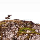 As the Eagle Flies by Kasia-D
