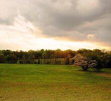 Shiloh Battlefield-33320 by Michael Byerley