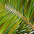 Palm Leaf by Debbie Oppermann