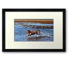 Aqua dog .4 Framed Print