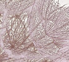 Miss Dandelions Cousin - Soft Macro by Sandra Foster