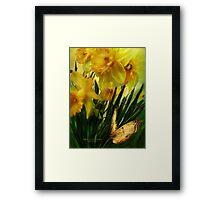 Daffodils - First Flower Of Spring Framed Print