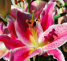 Lily Close Up by Penny Smith