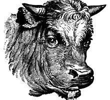 Vintage Cattle Head - Small horns - woodcut style by cartoon