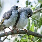 Noisy Minor chicks by pcbermagui