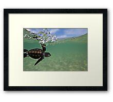 Baby surfing ninja turtle Framed Print