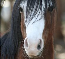 Missy: Welsh Section A mare by Diana-Lee Saville