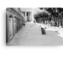 Cat in Poblenou Cemetery Canvas Print