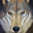 The Wolf by Katherine Appleby