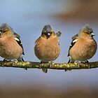 The Three Amigos by M.S. Photography/Art