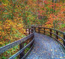 Autumn Walk by James Brotherton