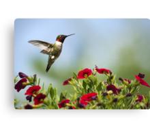 Hummingbird Frolic with Flowers Canvas Print