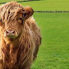 Portrait Of A Cow by Steven Dworak