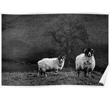 Sheep In The Dales Poster