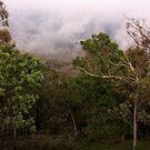 Mount Ainslee in the Fog (6) by Wolf Sverak