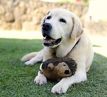 Rufus by justinmatoi