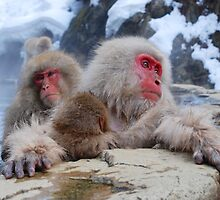 Snow monkeys Japan by Dean Jewell