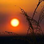 Sunset at Ubirr - Kakadu National Park, NT by Dilshara Hill