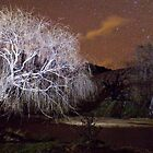 Trees have ghosts too by Barry Armstead