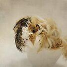 Kaito! by Lyn Darlington