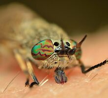 Horsefly bite by Matperry