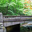 Bridge at the Moore Cove by venny