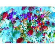 Secret Garden II Photographic Print