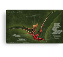 Male Pteranodon Sternbergi Muscles Canvas Print