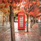 Autumn in London by Ursula Rodgers Photography