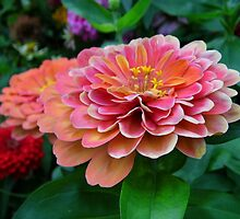 Zinnias by WildestArt