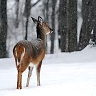 Snowy Whitetail Deer by Christina Rollo