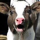 Dairy Calf by Christina Rollo