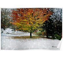 Beech Tree~ Caught in a Snow Flurry Poster