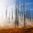 Tree Skeletons, Yellowstone National Park, USA. by photosecosse /barbara jones