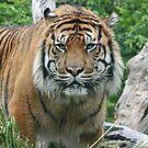 Terrific Tigers by Leanne Allen