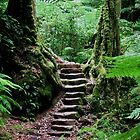 Rainforest Steps by Michael John