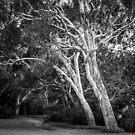 Yarra Bend Park, Kew by prbimages