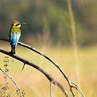 Rainbow Bee-Eater by ADAMAS