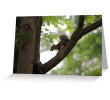 squirrel on the tree Greeting Card