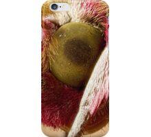 Elephant Hawk moth eye Extreme macro iPhone Case/Skin
