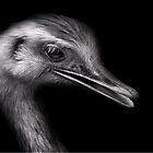 Endangered Rhea by Dennis Stewart