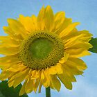Textured Sunflower by M.S. Photography & Art