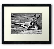 Sleeping Kangaroo Black and White Framed Print