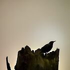 Bird Silhouette  by Cee Neuner